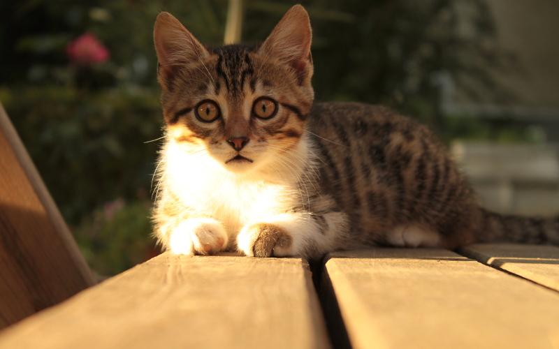 Kedinin kamerayla tanışması