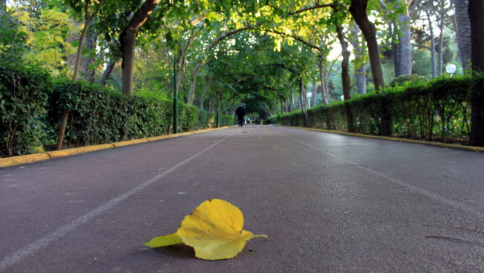 İzmir'de Sonbaharda koşulacak bir yol - İzmir Kültürpark Koşu Parkuru - Duvar kağıdını tam boyutlu indirmek için tıklayın